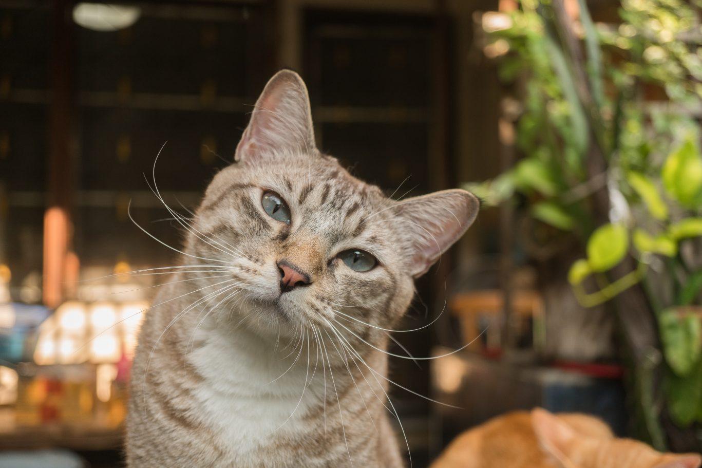 Zooterapia: a importância dos pets para a saúde de seus donos