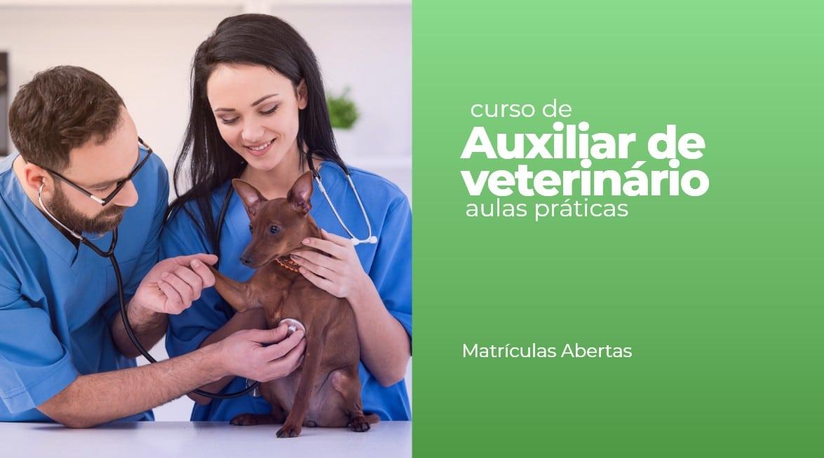 auxiliar de veterinário
