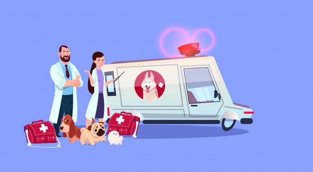 Curso de auxiliar de veterinário: para quem é indicado?